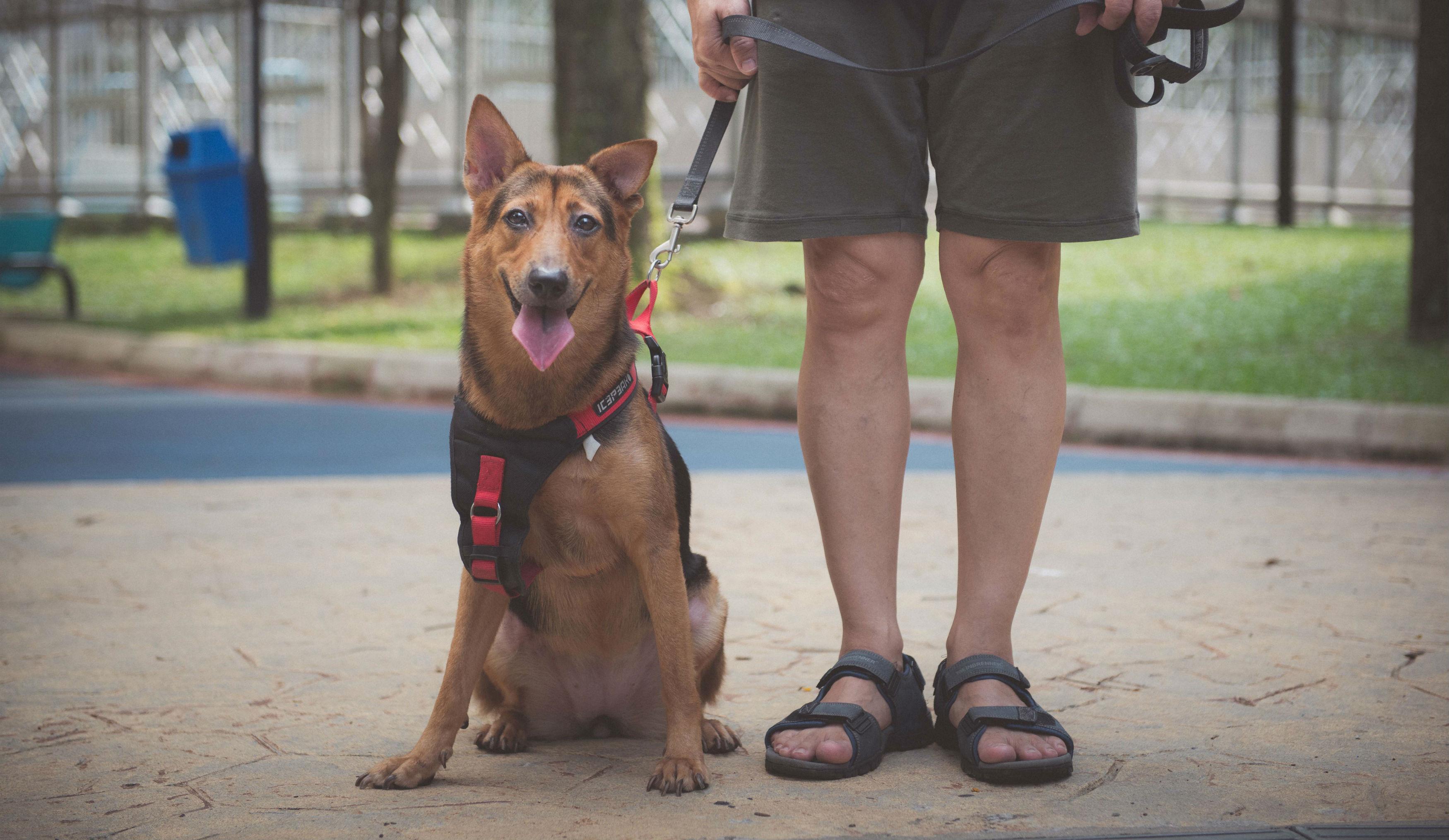 Man_with_Dog