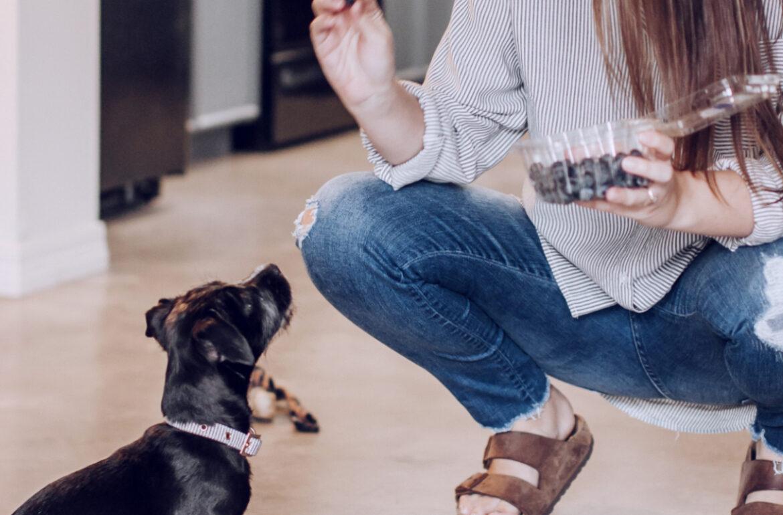 Dog waiting to eat