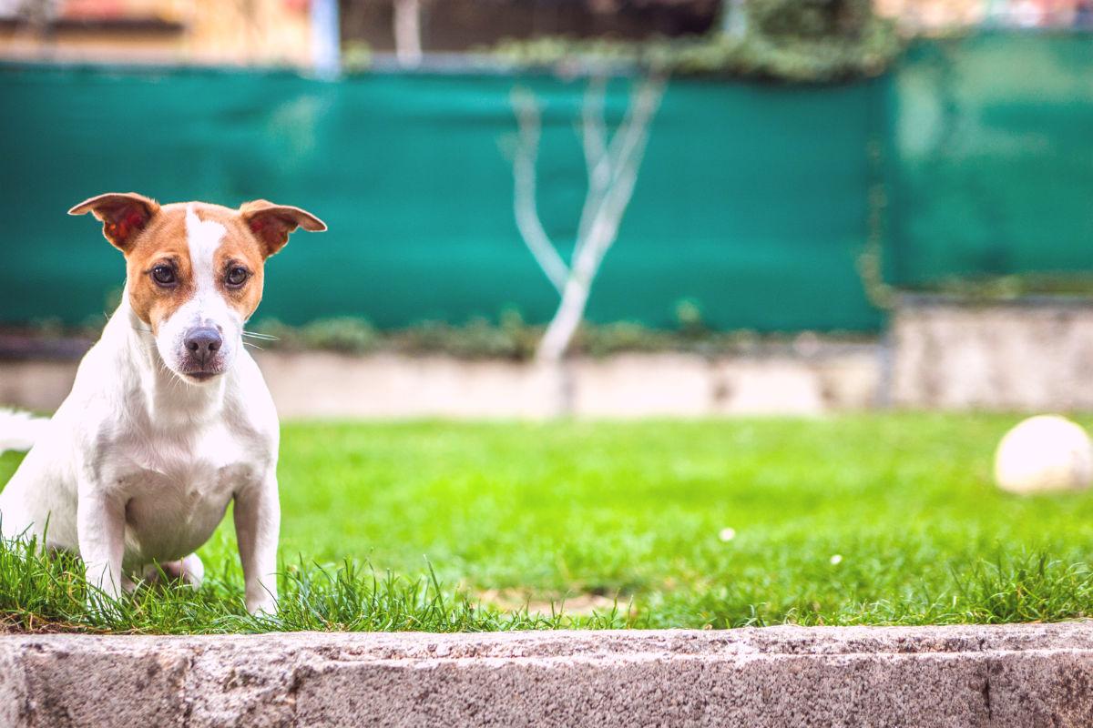 Dog squatting on grass