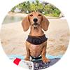 Dog review Regina Dobby