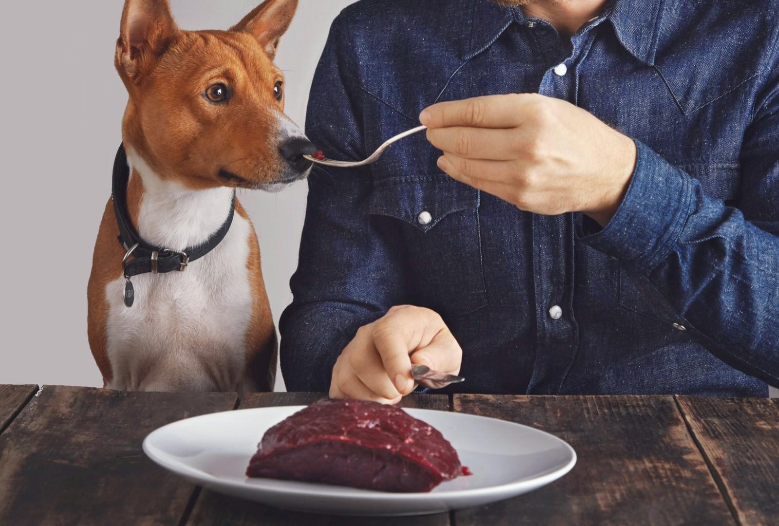 Dog sniffing raw food